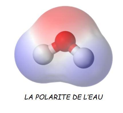 Dessin schématique de la molécule d'eau, H20 et de son champs magnétique.